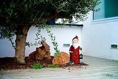 Ho-ho-ho (Kym.) Tags: andalucía andalusia beard cane christmas day7 holiday lantern nerja red santa spain tree xmas