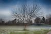 solitario (conteluigi66) Tags: luigiconte brina ghiaccio natura prato erba inverno freddo
