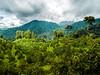 Apple Green Hills (hastuwi) Tags: batu jawatimur indonesia idn eastjava sumberbrantas bumiaji cangar apel apple