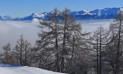 mélèzes (bulbocode909) Tags: valais suisse ovronnaz mélèzes arbres nature montagnes hiver neige paysages brume stratus bleu
