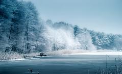 Freezing. (augustynbatko) Tags: snow frost landscape nature trees freezing lake scenery