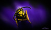 bee bath (skeem125) Tags: insects bees bugs macro waterdrops yellowjacket hornet