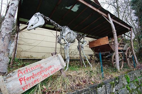 Pferdegerippe