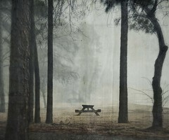 quite table (jssteak) Tags: canon t1i fog texas trees pine picnictable morning winter aged textured