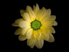 De amarillo (josem.arnau) Tags: naturaleza plantas flores flor color