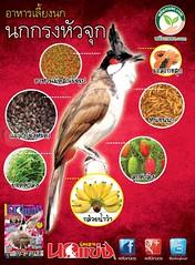 อาหาร นกกรงหัวจุก