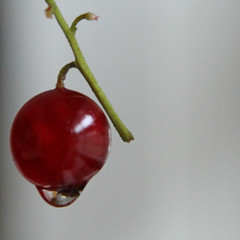 Aalbes/Currant (el.lemmens) Tags: red waterdrop drop rode druppel bes currant aalbes waterdruppel