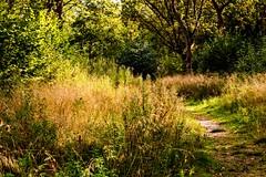 Tiddesley Wood - Autumn Gold (Macro light) Tags: autumn colour grass wildlife september trust worcestershire pershore autumncolour autumngold tiddesleywood