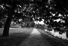 baixo  rbore (amargureiro) Tags: bridge autumn blackandwhite bw blancoynegro river shadows riverside galicia 1870mmf3545 d80 nikond80