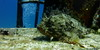Grumpy Scorpionfish, P 31 Wreck, Comino (yayapapaya77) Tags: fish underwater diving malta fisch shipwreck wreck mediterraneansea p31 scorpionfish wrack comino tauchen unterwasser mittelmeer drachenkopf skorpionfisch p31wreck canonpowershotg15 p31wrack