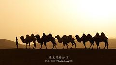 ( SiLeNcE ) Tags: china desert scenic basin camel xinjiang tarim  turpan    chinalandscape  northernxinjiang   kumtagdesert