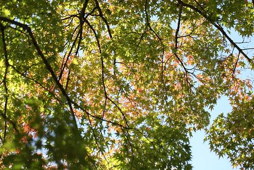 色づいてきた葉