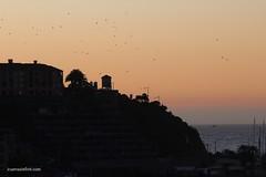 Atardecer Concn (ivangcuevasirarrazabal) Tags: sunset beach sepia club atardecer mar playa aves contraste yates concn bandada