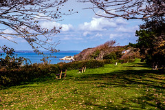 When The Leaves Fall (Simon Downham) Tags: autumn fall leaves bay october totland 2015 max4948