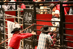 RAWF15 JSteadman 0110 (RoyalPhotographyTeam) Tags: sun royal rodeo 2015 rawf nov08
