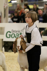 RAWF15 JSteadman 0093 (RoyalPhotographyTeam) Tags: sun cute kid royal goat 2015 rawf nov08