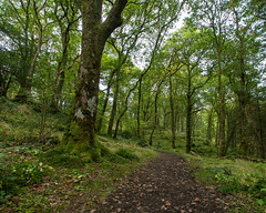Enchanted forest (pjparra) Tags: voyage travel autumn trees forest automne scotland moss wideangle arbres trossachs forêt mousse ecosse queenelizabethforestpark pentaxart