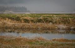 November Frost (Ian Threlkeld) Tags: winter canada cold nature nikon flickr bc britishcolumbia explore pacificnorthwest westcoast pnw irt naturephotography pittmeadows natuer beautifulbc alouetteriver canadianlandscapes nikonphotography nikonphoto hellobc d7000 canadianrivers mynikonlife