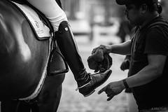 Devon 2016 (Jen MacNeill) Tags: devonhorseshow2016 devon horse show equine equestrian pennsylvania pa black white bnw bw blackandwhite groom grooming