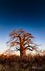 Baobab On Fire (Alec Lux) Tags: botswana makgadikgadi baobab blue fire landscape nature red saltpan sky sunset tree