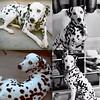 Goodbye (aaron_anderer) Tags: rip goodbye dog dalmatian