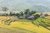 _J5K6847+49.0915.Lìm Mông.Mù Cang Chải.Yên Bái. (hoanglongphoto) Tags: asia asian vietnam northvietnam northwestvietnam vietnamlandscape vietnamscenry vietnamscene village homes house terracesterracedfields terracedfieldsinvietnam tâybắc yênbái mùcangchải phongcảnh ruộngbậcthang ruộngbậcthangmùcangchải lúachín mùagặt mùagặtmùcangchải harvest lìmmông bảnlàng ngôinhà nhữngngôinhà bảnlìmmông outdoor