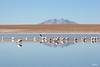 Flamingos (Guittoni) Tags: bolivie bolivia flamingo lagnua canon eos uyuni tour travel outdoor mountains salt salar landscape