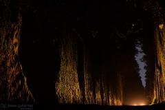 The Light (gjaviergutierrezb) Tags: light lights carlights dark forest
