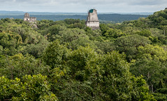 20161120-1127 Belize_DSC5498.jpg (koloding) Tags: ancient belize tikal mayan centralamerica pyramids culture decay mayanruins tropical indian