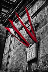 IMG_0483-Korr.jpg (stefano#36) Tags: effekt architektur 2011 flaggen schwarzweis wien bäume winter sw