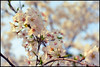 *WHU (WangDingyi) Tags: olympus om1 zuiko om 50mm f14 wuhan china color film 135 kodakektar100