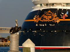 Port Canaveral, FL (Rusty Clark) Tags: sorcerers apprentice mickey mouse brooms stern pelican