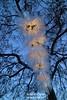 s170106_1799+_EisBlumen (gareth.tynan) Tags: eisblumen iceflowers snowfrost weihnachtsbeleuchtung
