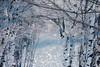 Aspen Arch (Karen McQuilkin) Tags: theawardtree winter fantasy snow bokeh hike snowshoe utah trees apsens apensarch