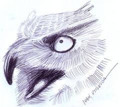 buho a lapicero (ivanutrera) Tags: draw dibujo drawing dibujoalapicero boligrafo animal bird ave sketch sketching lapicero pen owl buho dibujoaboligrafo