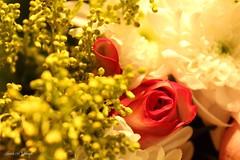 Roses Day (Nourah.A.Edhbayah (Super Flower♥إظبيه)) Tags: الكويت اظبيه عبدالله نوره q8 kuwait edhbayah abdullah nourah day roses