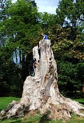"Irresistible (FernShade) Tags: vancouver ""britishcolumbia"" canada ""stanleypark"" children childrenclimbing treeclimbing urbannature tree treeremnantvancouver""britishcolumbia""canada""stanleypark""ornatetreestumpchildclimbingurbannatureurbantrees stanleypark"