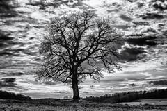 Anticipating... (Ody on the mount) Tags: anlässe bäume em5ii himmel landschaft mzuiko2518 omd pflanzen schwäbischealb silhouette solitär wanderung wolken bw monochrome sw lenningen badenwürttemberg deutschland de
