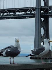 Seagulls and westernmost tower (Rubén HPF) Tags: bay bridge oakland san francisco yerba buena tunnel