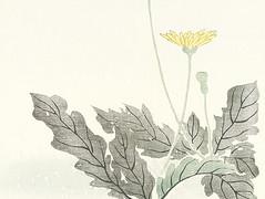 Dandelion (Japanese Flower and Bird Art) Tags: flower dandelion taraxacum asteraceae kiseki takata nihonga woodblock picture book japan japanese art readercollection