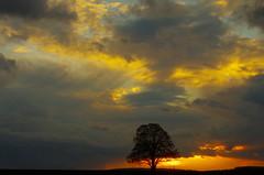 Stormy evening (reto.boerner0004) Tags: tree stormy clouds wolfschlugen storm unwetter stürmisch baum einsamer lonely wolkenhimmel wolken himmel sky evening light abendlicht sunset sonnenuntergang landscape landschaft grötzingen