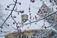 Snow Covered New Destiny CME Church
