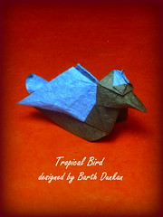 Tropical Bird by Barth Dunkan (aka Magic Fingaz) (Thomas Krapf Origami) Tags: bird paper origami magic tropical dunkan paperfolding barth vogel tropen tropicalbird fingaz papierfalten magicfingaz barthdunkan