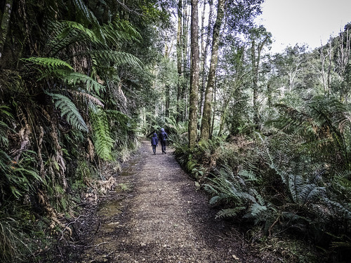 Bushwalking #2, Montezuma Falls, Tasmania's West Coast
