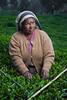 IMG_2506 - Tea picker (Stuart Butler / Oceansurf) Tags: tourism asia tea srilanka hillcountry teaestate tealeaf nuwaraeliya teapicker feb2014