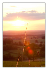 Hipster sunset in Allier, France (Pito Charles) Tags: sunset blur france nature field soleil bokeh outdoor champs coucher pre fields rayon allier campagne herb flou champ herbe pres prs pr
