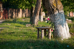 A new day (roger_popa) Tags: morning flower tree bench countryside romania brasov nuc banca copac dimineata lonelybench zizin rogerpopa