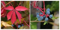 Herfst Explore 20150922 (Olga and Peter) Tags: autumn fall germany herbst herfst regensburg duitsland fp108074463