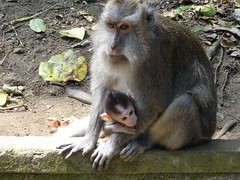 Monkeys forest