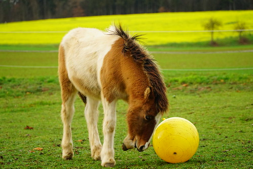 Saphir playing soccer 2